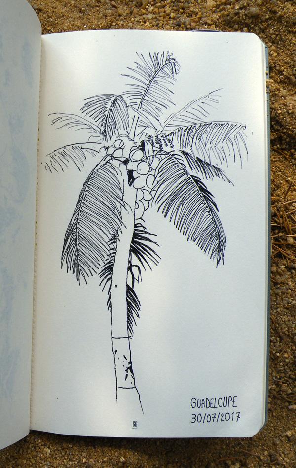Dessin d'un palmier de Guadeloupe, par Audrey Dugas